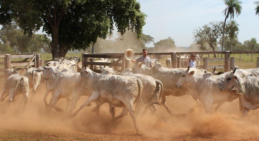 Avoid the Herd of Bulls Stampeding Toward the Exit