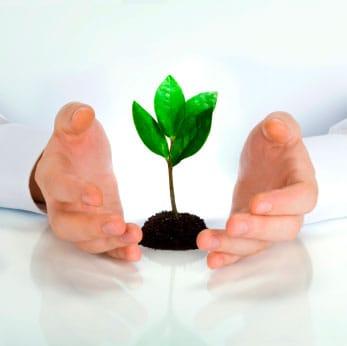 Man With Plant Growing Between Hands   Gold IRA Account Metaphor